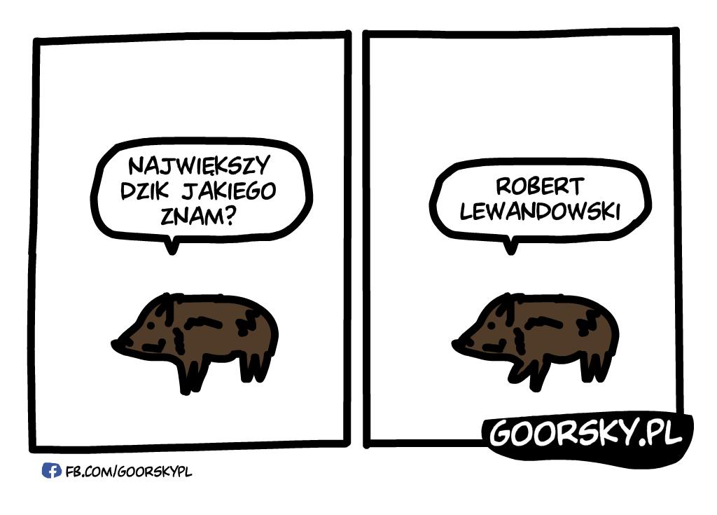 Lewandowski Dzik
